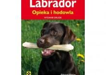 Labrador. Opieka i hodowla [opr. miękka]
