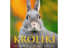 Króliki [opr. broszurowa]